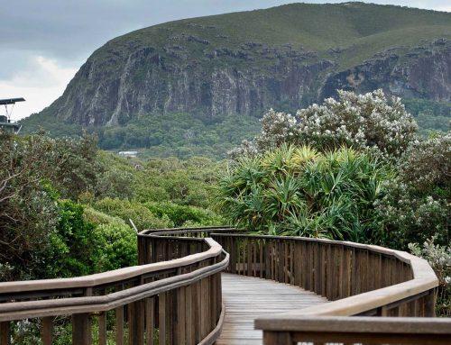 Mount Coolum Summit Walk